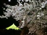 兵庫県篠山市:篠山城の夜桜